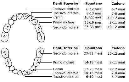 Dentatura Decidua e permanente
